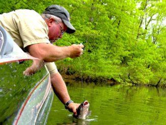 Catch Spawning Channel Catfish