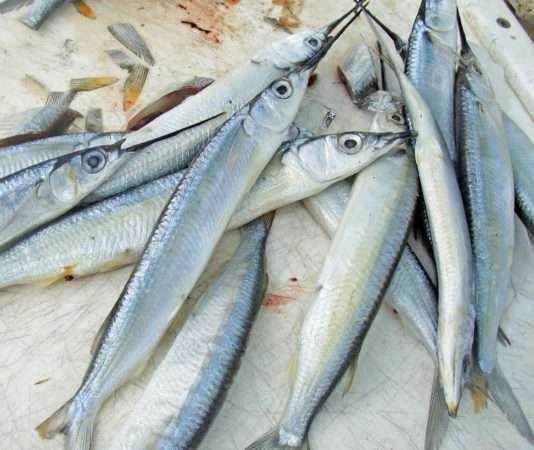 Reef Fishing the Florida Keys • Rambling Angler Outdoors