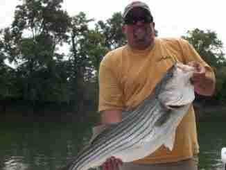 cumberland river fishing